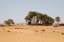 """Central view of Dakhla, with """"Coco Jungle"""" in the distance."""